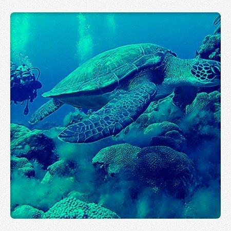 Tortuga (foto de archivo de Arrecifal, Centro de Buceo)